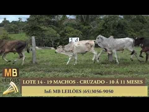 224º LEILÃO VIRTUAL MB LEILÕES