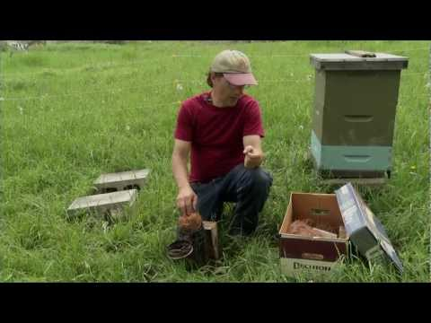 Natural Beekeeping with Ross Conrad DVD Trailer