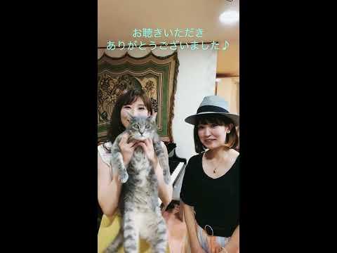 神奈川『バーチャル開放区』♪Borderless  / MARIERIKAの画像