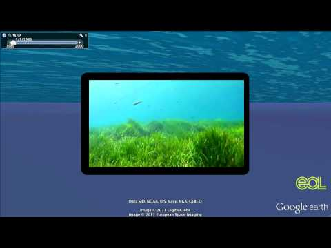 Sea Grapes: A Google Earth Tour