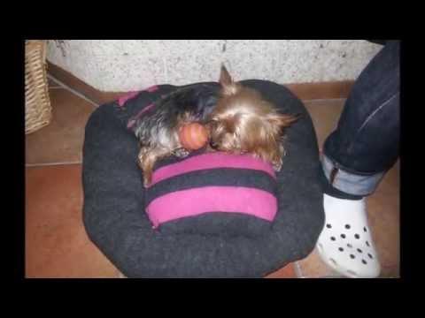 Realizzare una cuccia per cani e gatti con un maglione
