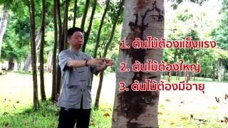 ชี่กง -วิธีรับพลังจากต้นไม้