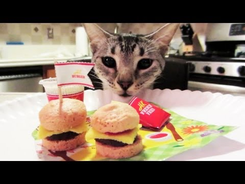 I Can Has Cheezburger - Follow us on Twitter: http://twitter.com/PhillyChic5 http://twitter.com/JesseWelle Facebook: http://facebook.com/prankvsprank Follow me on Keek - http://www....