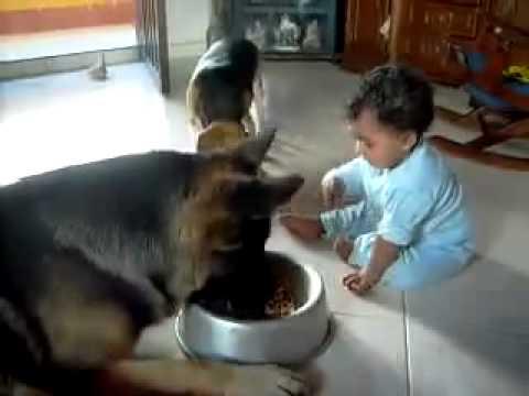 Patient dog – Türelmes kutya