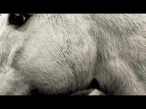 Bonny Light Horseman - The Roving (official audio)