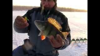 Зимняя рыбалка на Ахтубе 2013 г Ловля на балансиры