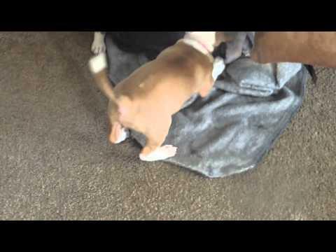 George and kiwis puppies11014