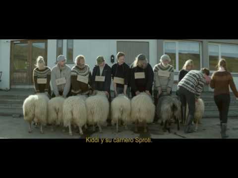 Rams: La historia de dos hermanos y ocho ovejas (2015) Trailer
