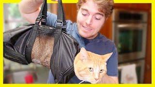 Video TESTING WEIRD CAT PRODUCTS MP3, 3GP, MP4, WEBM, AVI, FLV Januari 2018