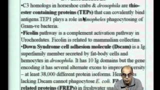 Mod-22 Lec-40 Evolution Of The Immune System