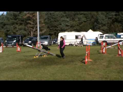 Paige AKA Nedlo What's The Story - Grade 7 Agility DV Oct 2012 - 3rd Place