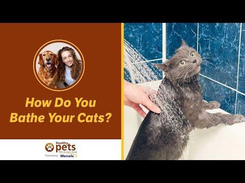 Anteprima Video Come fare il bagno al gatto