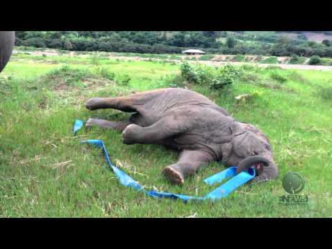 Elefantunge leker :)