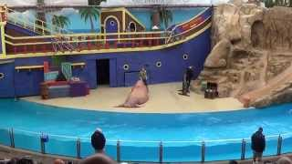 SeaWorld Orlando - Clyde and Seamore Take Pirate Island - Complete/Full video