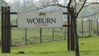 Woburn United Kingdom  City pictures : Vlog #3 | Day Trip to Woburn Safari Park | Bedfordshire, UK