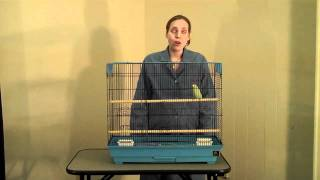 The Importance Of Veterinary Visits For Your Pet Bird