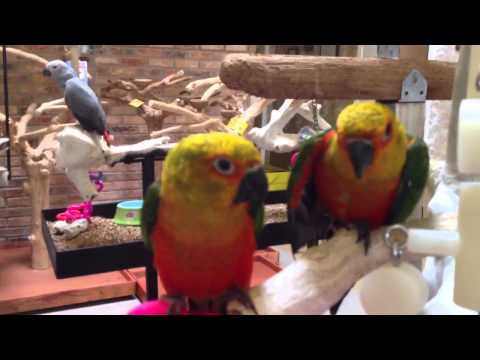 Baby parrots at Kookaburra Bird Shop Sept 14, 2013