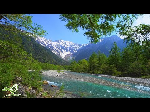 Beautiful Relaxing Music - Peaceful Piano, Cello & Guitar Music By Soothing Relaxation