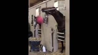 animale calul si mingea