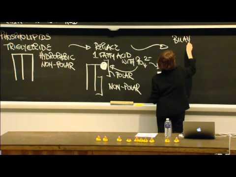Macromolecules: Lipids, Carbohydrates, Nucleic Acid, Excerpt 1 | MIT 7.01SC Fundamentals of Biology