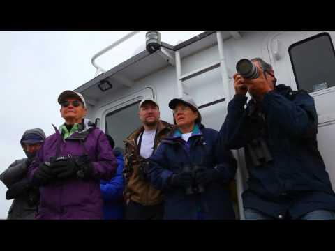 Pelagic birding in the Aleutian Islands, 2012