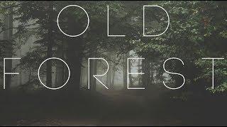 Музыка старого леса для релаксации