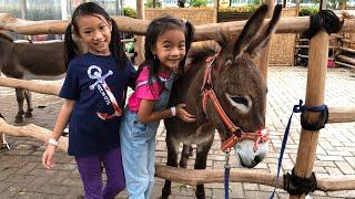 Video Zara Cute kasih Makan Hewan Ternak | MINI BARN at Scientia Park MP3, 3GP, MP4, WEBM, AVI, FLV Januari 2019