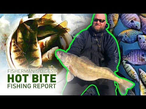 Erie Walleyes in January, Upper Peninsula Ice Fishing Reports, & More! - Hot Bite Fishing Report
