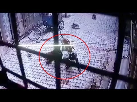 Street monkeys attack man in north India, forcing him to the ground