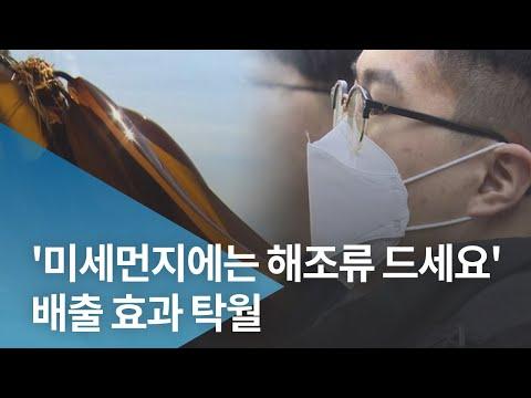 '미세먼지에는 해조류 드세요' 배출 효과 탁월 동영상의 캡쳐 화면