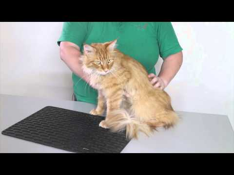 Animal welfare and health: How to health check a cat 2