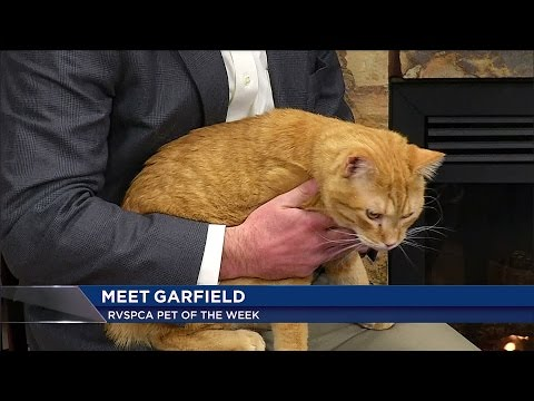 Help Garfield find a new loving home
