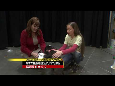 Humane Society of Missouri Puppy Gram