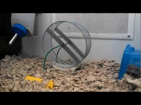 跳出老鼠圈!這隻花栗鼠決定用不一樣的方式跑出自己的鼠生!