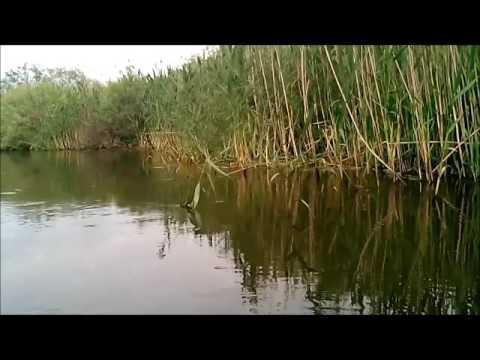 Брянская \Амазонка\ - река Нерусса - DomaVideo.Ru