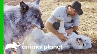 LARC's Best Rescue Success Stories | Wolves and Warriors by Animal Planet