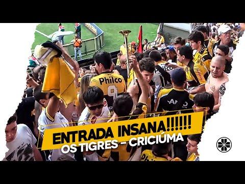 Os Tigres | Entrada da banda - Criciúma 1 x 0 São Paulo - Os Tigres - Criciúma