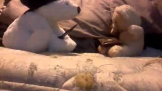 The Sad, Sad Life Of A Tan Teddy, In The Hood :'(