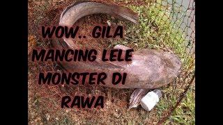 Mancing Di Rawa Dapat Ikan Lele Monster