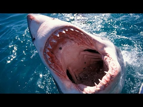 10 Things You Didn%27t Know About Sharks