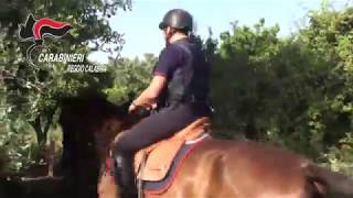 Reggio Calabria: Carabinieri a cavallo scoprono piantagione di marijuana