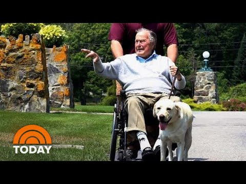 Inside George H.W. Bush's Special Bond With Service Dog Sully   TODAY