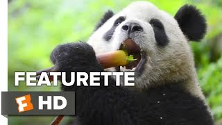 Nonton Pandas Featurette   Making Pandas  2018    Movieclips Indie Film Subtitle Indonesia Streaming Movie Download