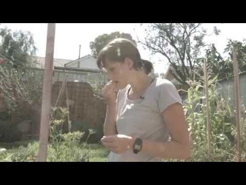 Moreland Council's Solar Panel Bulk-Buy – Lara and Eddie video