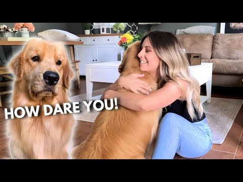 Sweet Moments: When Dogs Get Jealous of Each Other