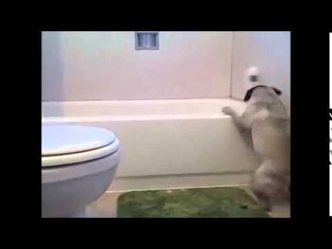 Кучешка баня