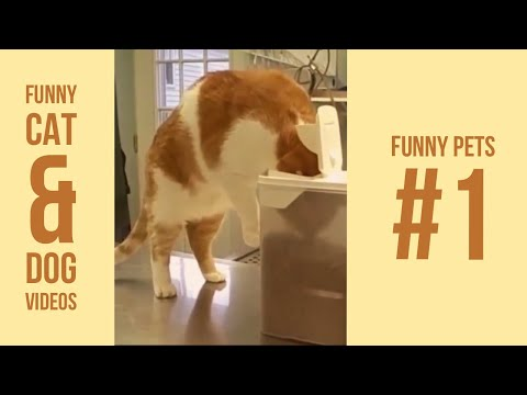 Funny cat videos - Funny Cat and Dog Videos  New 2018