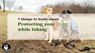 Things to Know about Protecting Your Dogs while Hiking