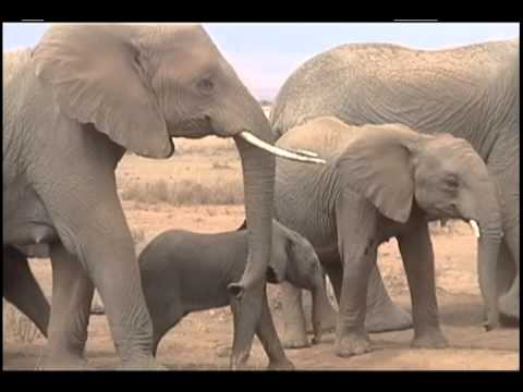 0 Human and Elephant Bond