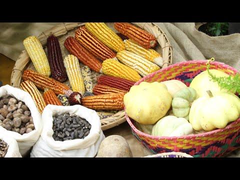 7ª Feira de Sementes Crioulas em Canguçu/RS